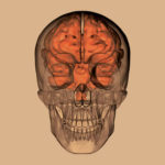 Eighth International Skull Base Dissection Course